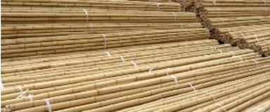 Cane Pole Manufacturing