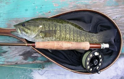 Fly Fishing Small Mouth Bass