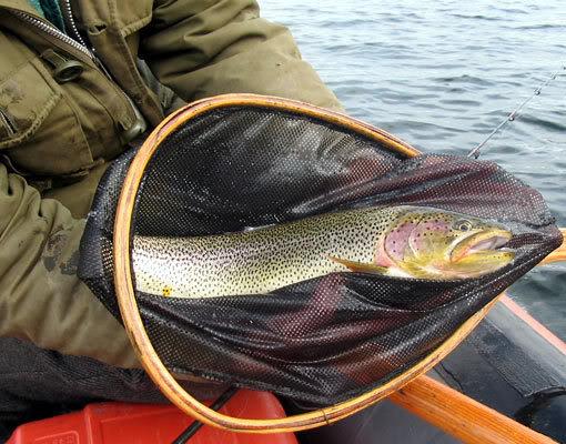 Fly Fishing Rainbow