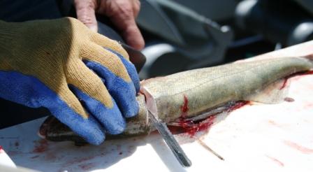 Will Electric Knife Cut Through Bone