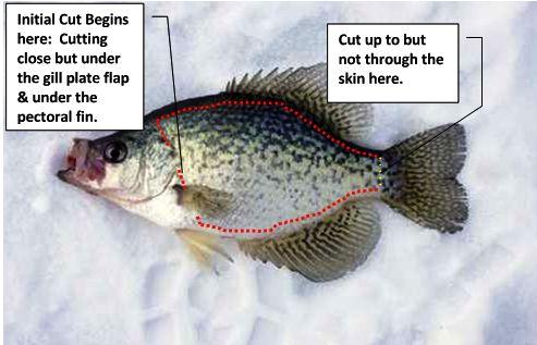 fish anatomy, fish diagram, anatomy of a fish